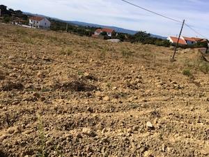 O meu projecto agrícola