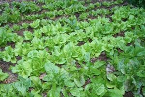 Formas alternativas de escoar produtos agrícolas