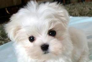 Seguro Responsabilidade Civil para Cães