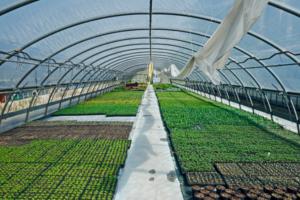 Produção em estufa. Agricultura do futuro