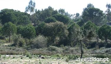 Investir no sector primário: florestar propriedades abandonadas