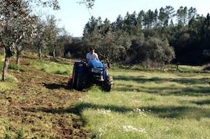 investir agricultura
